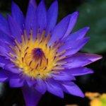 Meditation Mitgefühl