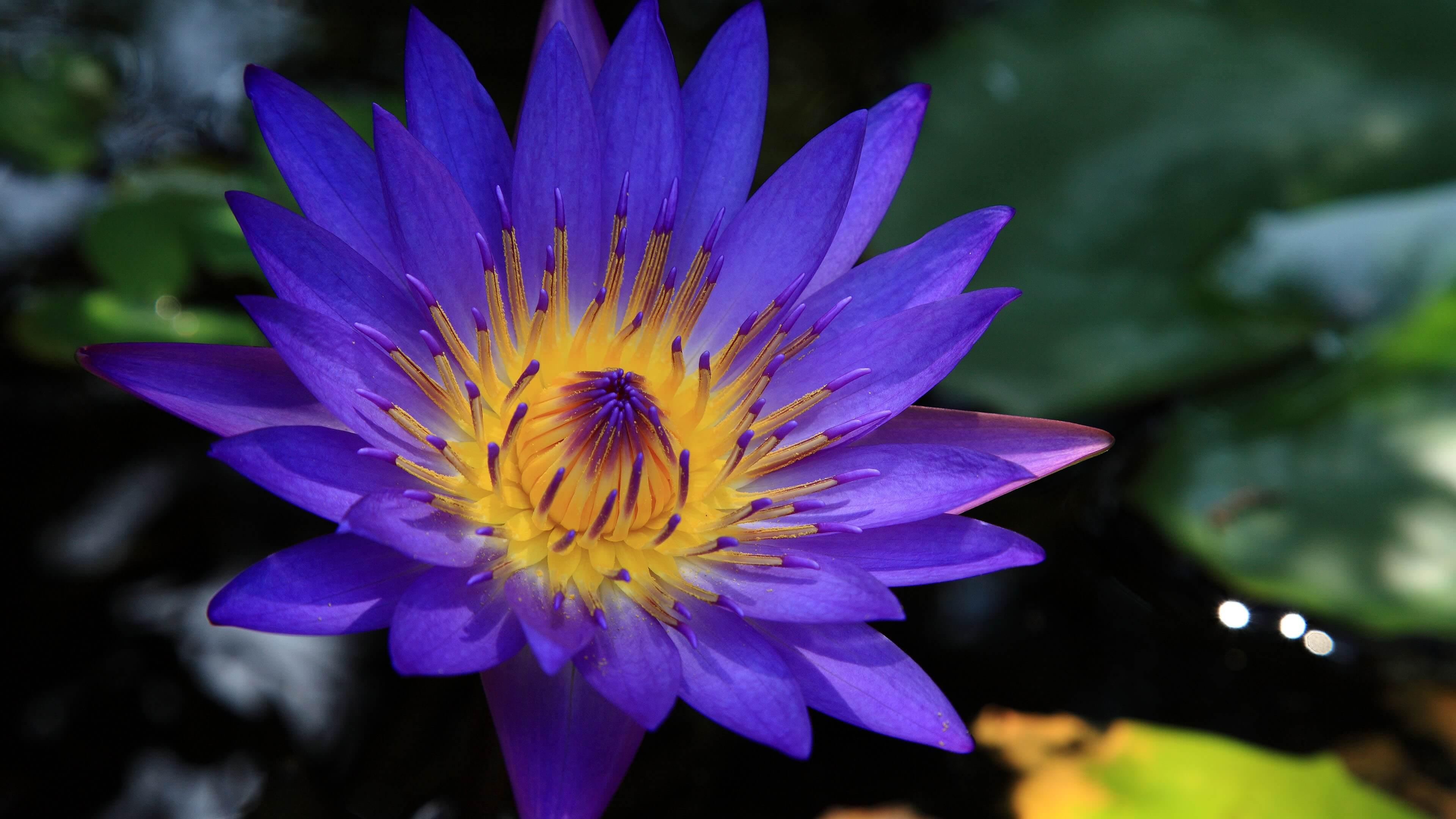 Meditation Tandava